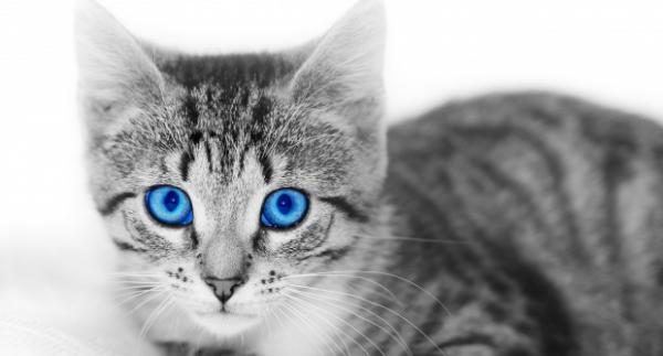 Embert macskára konvertáló kalkulátor