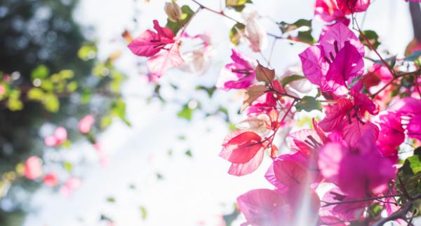 Meg tudod oldani ezt a virágos feladatot?