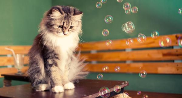 Macska életkorát emberi életre átszámító kalkulátor